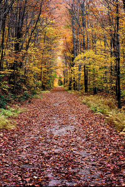 Fall Path 2 - Vermont