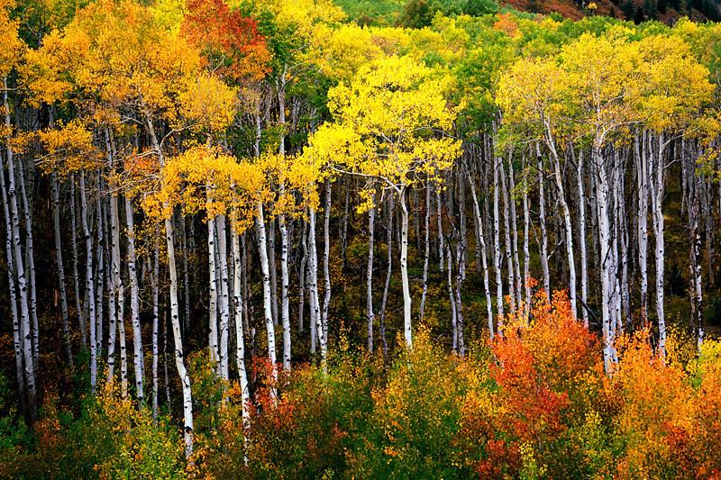 McClure Pass - Colorado