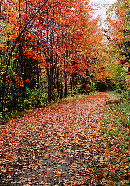 Fall Path - Vermont