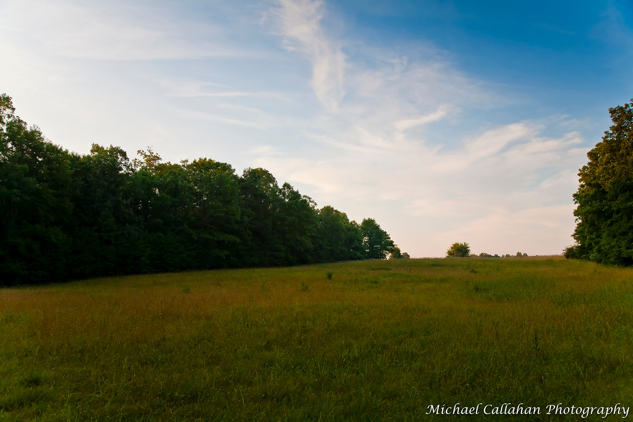 Mentone Meadow
