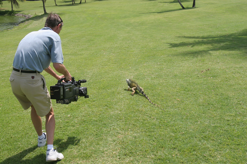 Chasing an iguana on the golf course in the Carribean