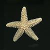 A Starfish Skeleton