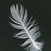 A Feather