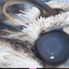 Moths Eye\