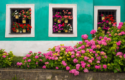 Flowers in windows