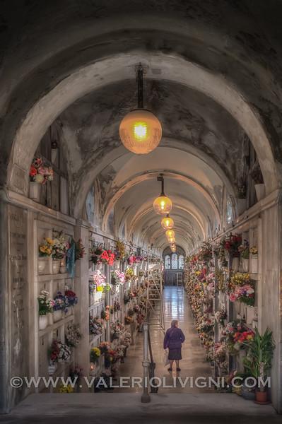Flowers comparison at the Monumental Graveyard - Confronto di fiori al Cimitero Monumentale