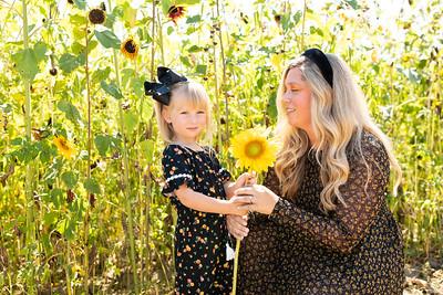 Sunflower-11