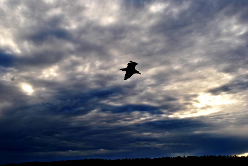Bird in Flight in Acadia National Park in Maine