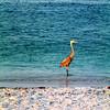 Florida Bird 2
