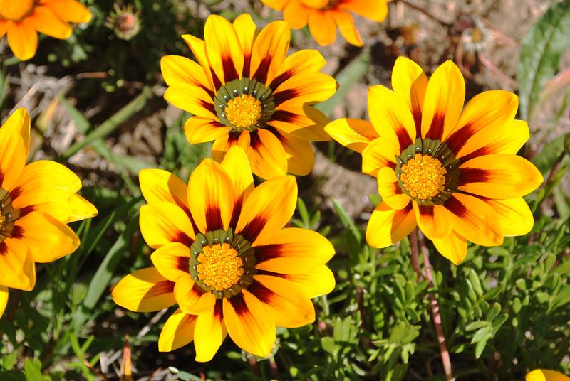 Flowers in Costa Mesa 3