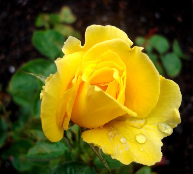 Rose Garden in Honor of Rose Kennedy in Boston 3
