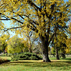 Fall Colors in Washington Park in Denver 2