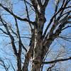 Tree on South York in Denver Colorado