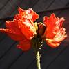 Pretty Orange Flower in Orange County California