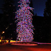 Christmas Tree in Vail Colorado