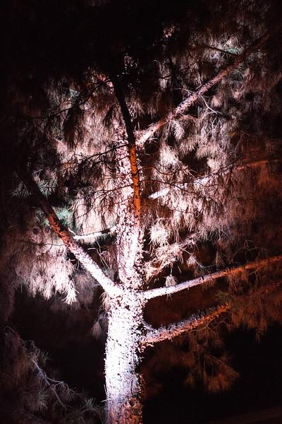 Abstract Tree Shot at Night