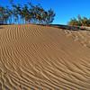 Mesquite Sand Dunes 4