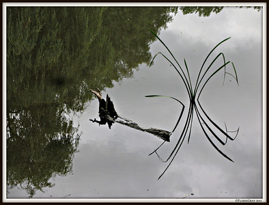 Zen Moment at Her Ladyship's Pond; Wroxton Abbey, Oxfordshire
