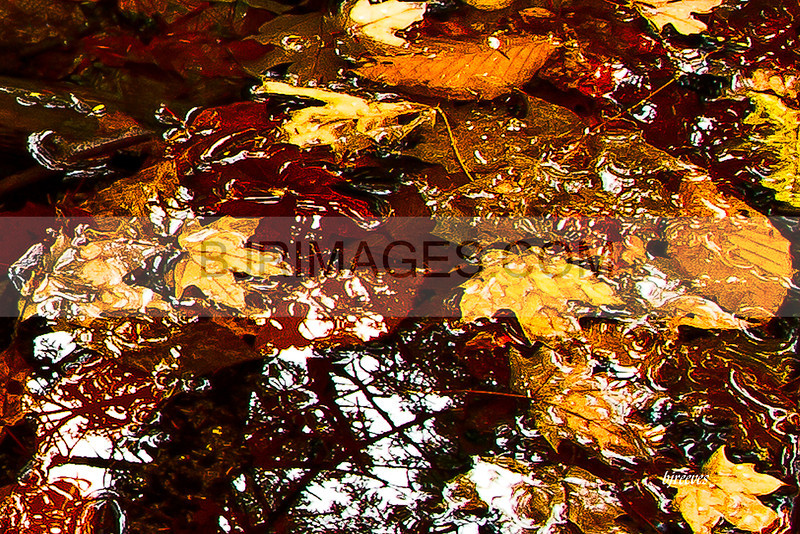 Leaves and Reflections 2