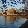 Cherry Blossum time in Washington.  Jefferson Memorial in the background.