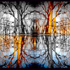the forest mirror #2