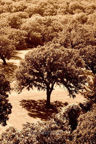 tree sepia