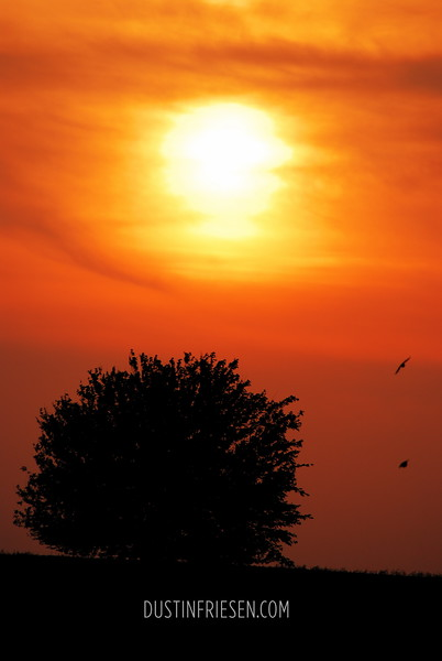 Sunset over tree with birds