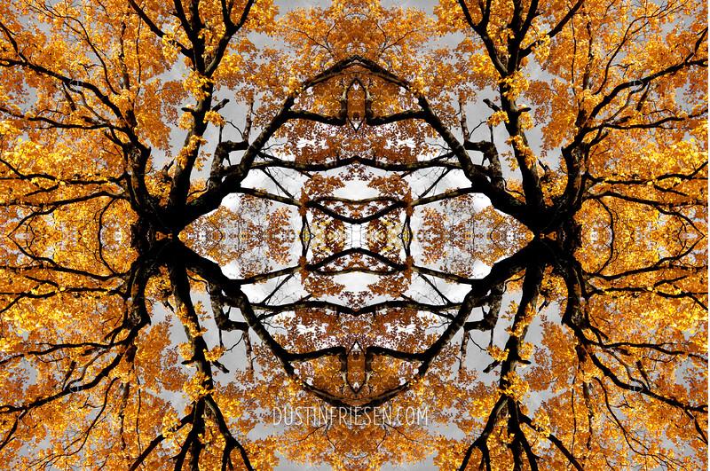 fall tree mirror #1