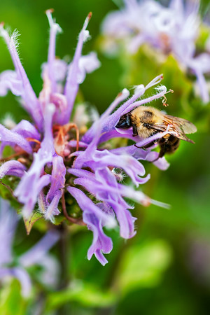 Buck Creek Bee & Bee Balm