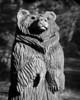 Bear8055e