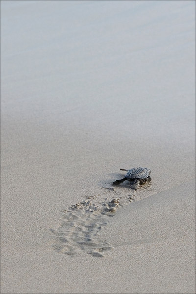 Baby turtle release, Acapulco
