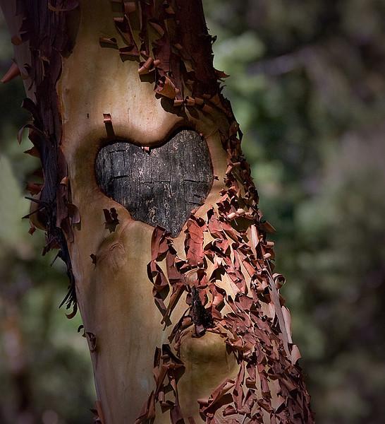 Tree heart0052