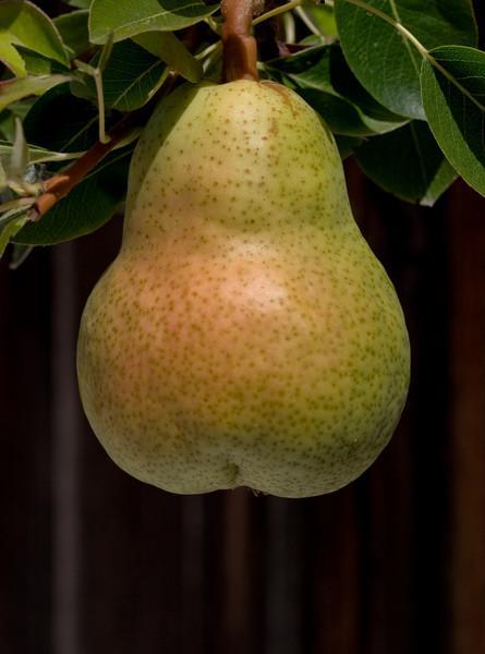 """""""Big Butt Pear"""""""