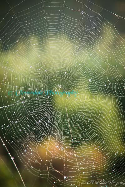 SpidersWebs-3688