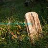 Autumn_2012-3764