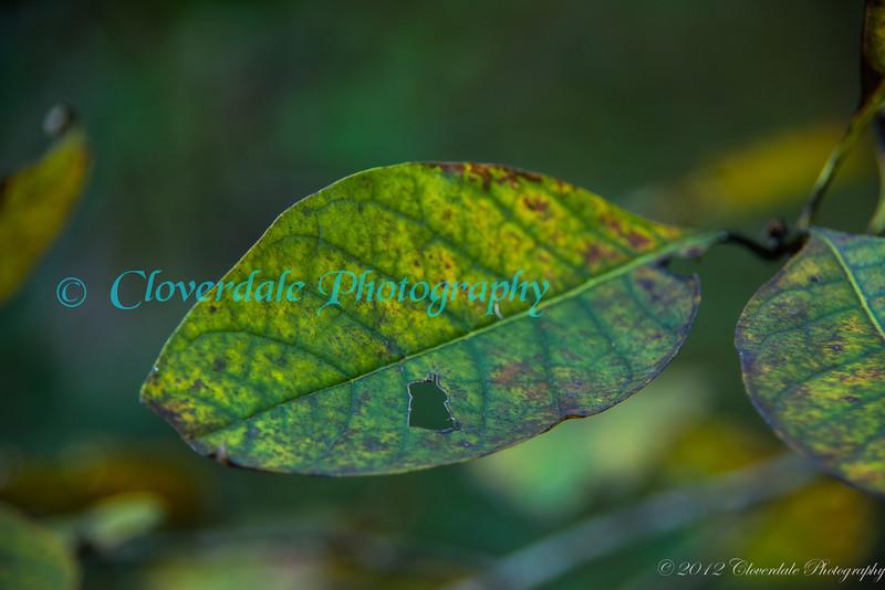 Autumn_2012-3765