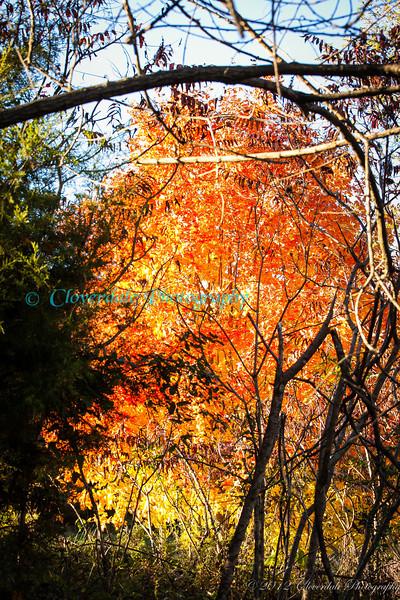 Autumn_2012-3859