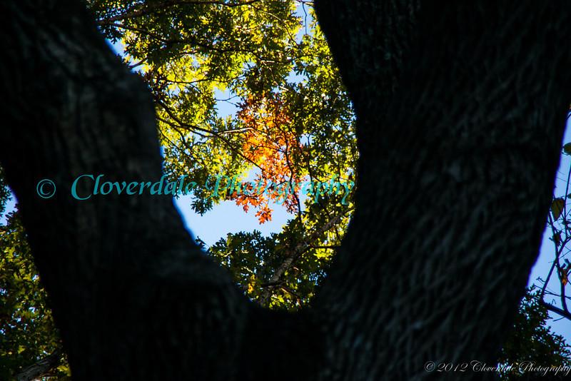Autumn_2012-3759