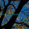 Autumn_2012-3758