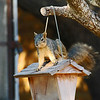 How ironic. The squirrel steals food from the birds, while fleas steal food from the squirrel. Serves him right!