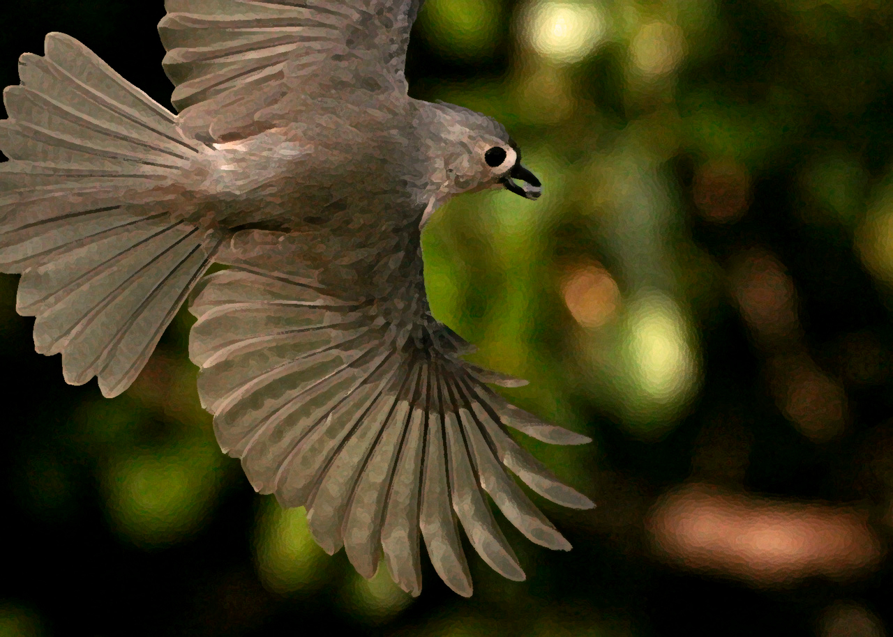 Titmouse in Flight