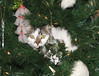 One of our cats decided that he was a Christmas tree ornament and climbed up inside the tree