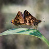 Love bugs :))