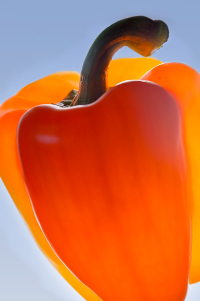 Orange Bell Pepper.