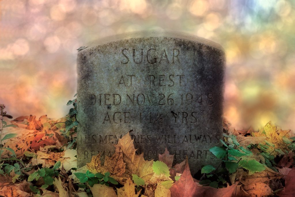 RIP Sugar.<br /> On my way to the park, I was distracted and missed the entrance and a mile or two down the road came upon this pet cemetery.