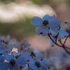 Springtime in Clarksville