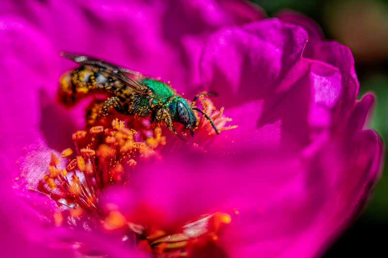 Bee in the flowers.