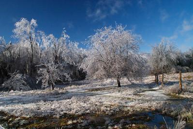 Field in Ice