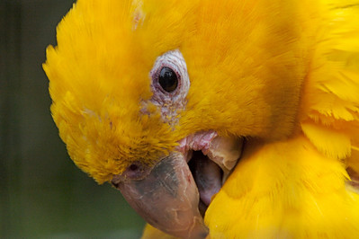 Bird - Foz do Iguacu