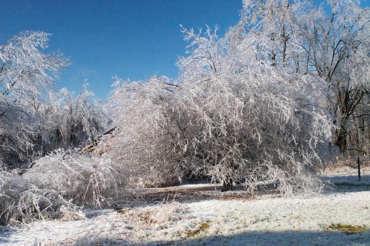 Frozen Everything
